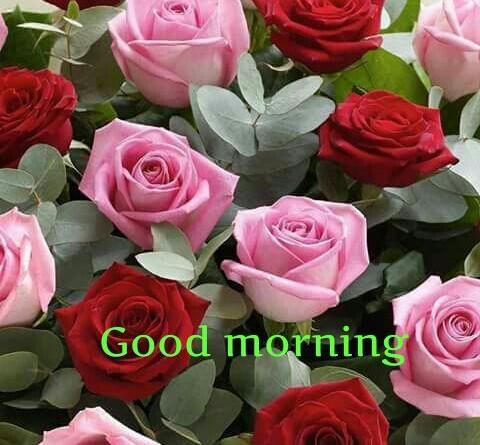 Good morning with roses hindi status hindi whatsapp - Good morning rose image ...